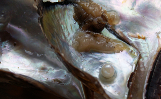Cultured Pearl in Shell