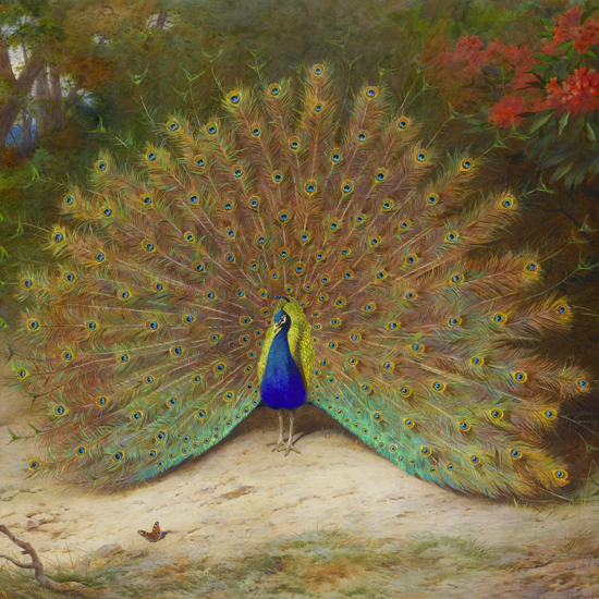 Archibald_Thorburn,_Peacock_and_Peacock_Butterfly
