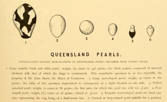 Queensland Pearls