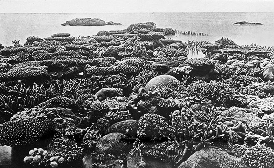 Queensland_State_Archives_1011_Exposed_Coral_Great_Barrier_Reef_c_1931